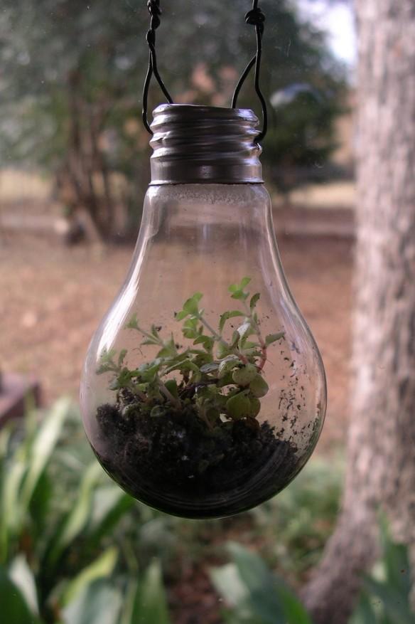 LR bulb closeup