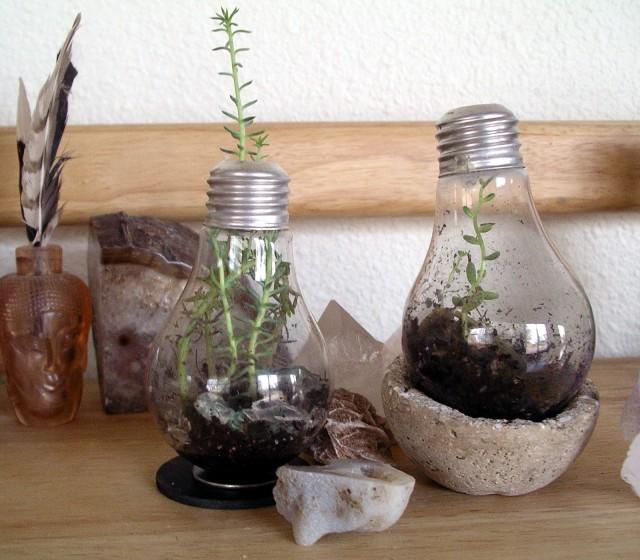 LR bulbs 2