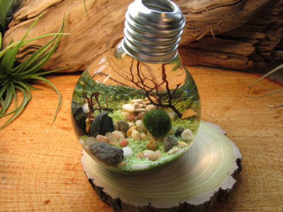 marimo ball bulb aquarium