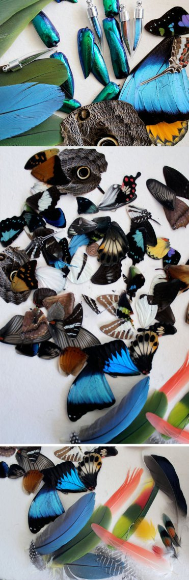butterfly and beetle wings