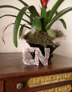 CN logo with bromeliad