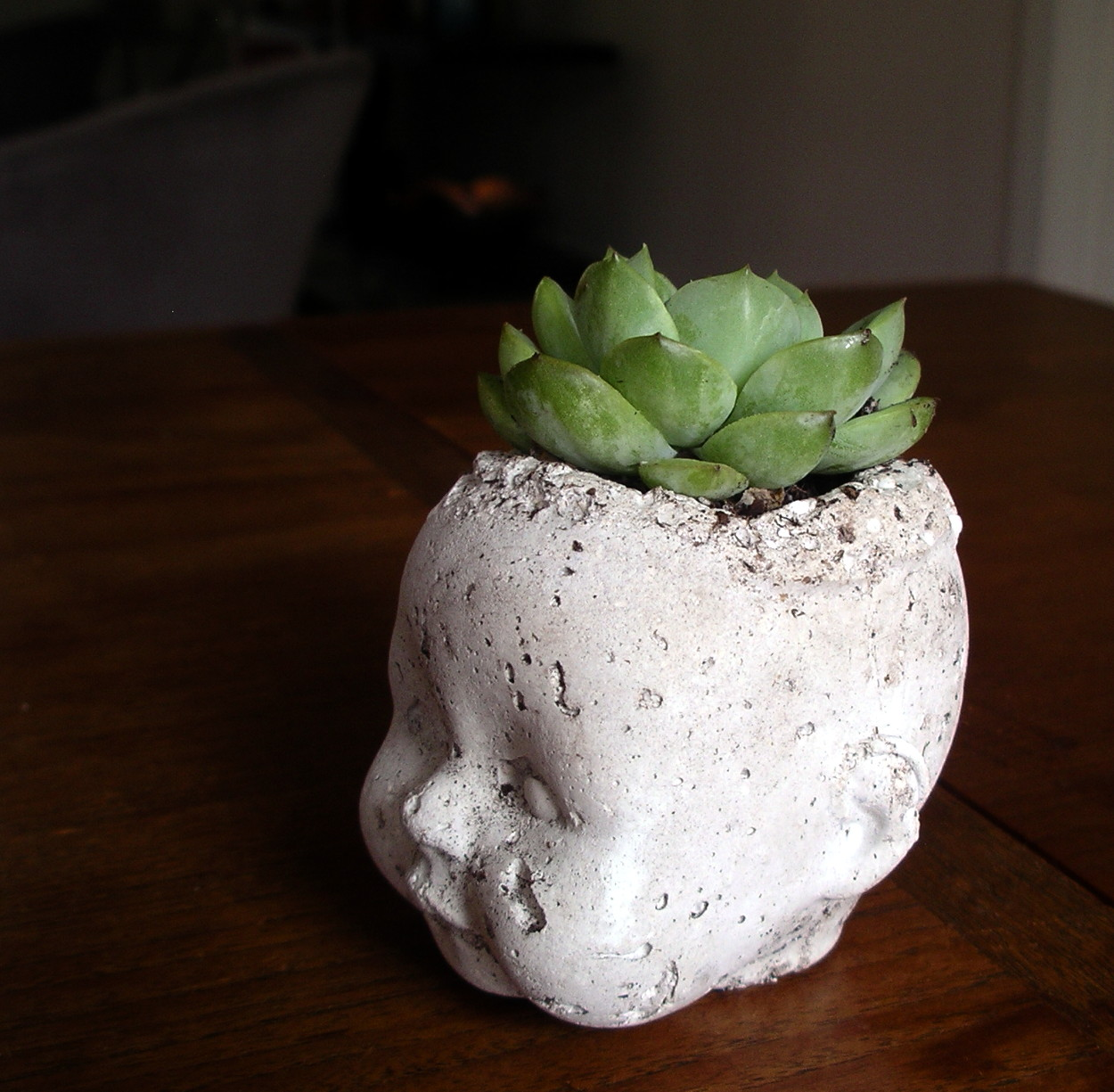 Pudge Baby Succulent 3.4 View
