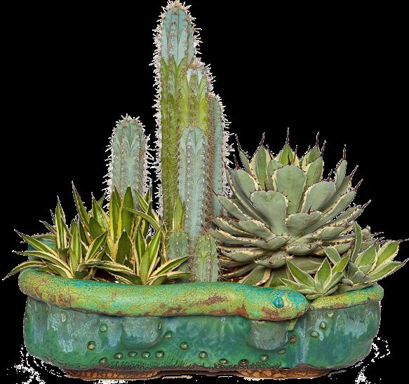 rickvandykesnakesucculent